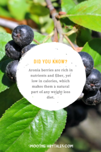 aronia berry chokeberry facts