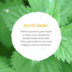 nettle facts pic